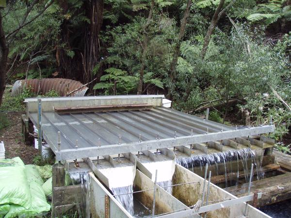 NIWA gives aquatic insects an obstacle course