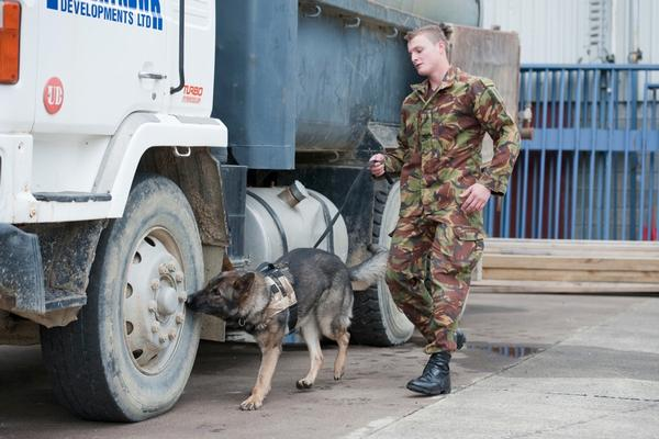 Dog handler Sapper Liam Harris with Xia, detecting hidden explosives as part of training.