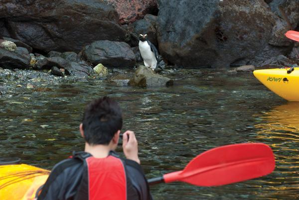 Getting up close to the wildlife in Milford Sound with Southern Discoveries.