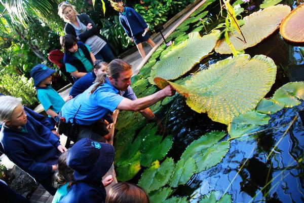 Amazing Amazon lily pad in Auckland Domain amazed Chelsea School students