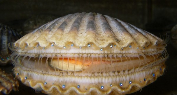 Northerners want Scallop fishery to remain closed